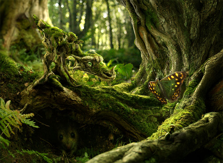 The Moss Dragono & The Butterfly