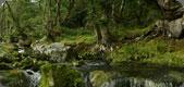 Glencree (II)