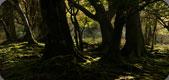 Sunlit Woods